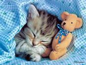 animals_wallpaper_1031.jpg